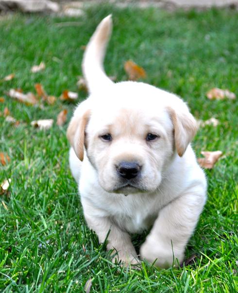 Puppy one