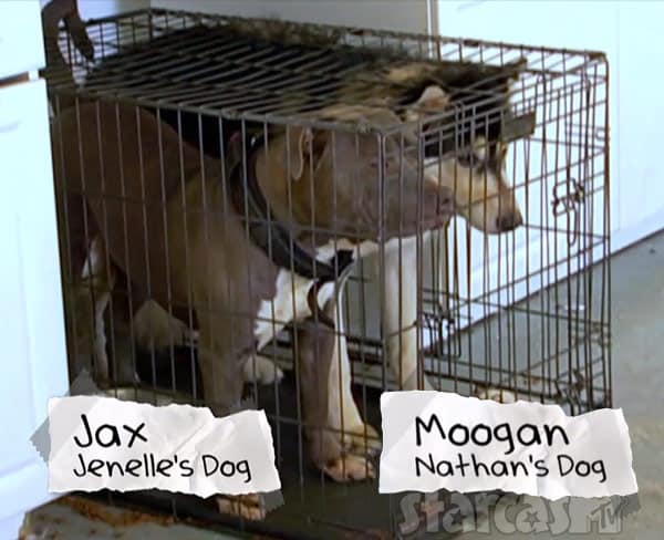 Jenelle Evans dogs Jax and Mugen in a cage