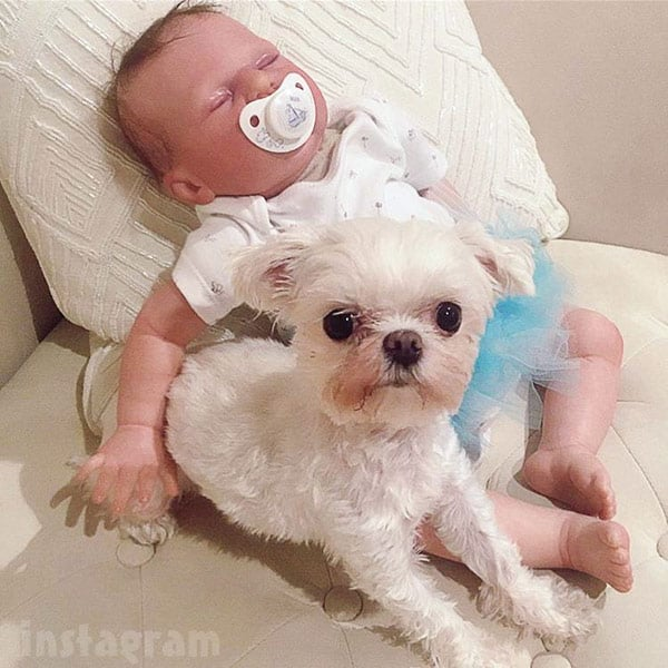 Courtney Stodden reborn baby and her dog