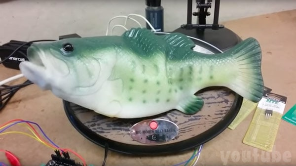 Big Mouth Billy Bass Alexa video