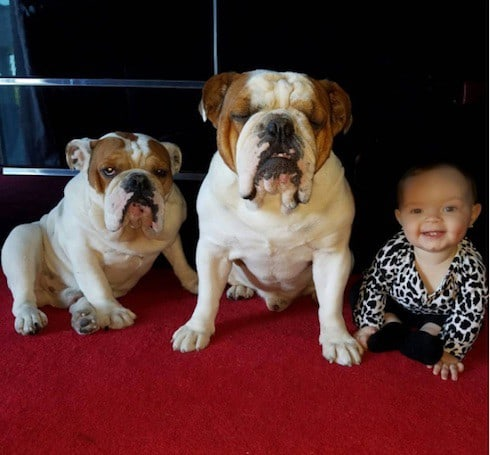 Coco Austin postpones daughter Chanel's first birthday to mourn the loss of their dog Spartacus