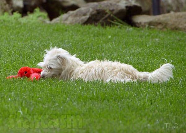 Matt Roloff's dog Lucy Girl