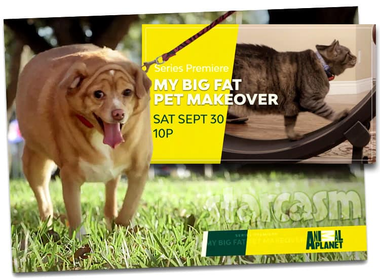 My Big Fat Pet Makeover Animal Planet show