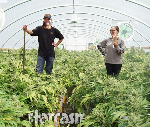 Did Teen Mom 2 stars Jenelle and David Eason try to grow pot on The Land?