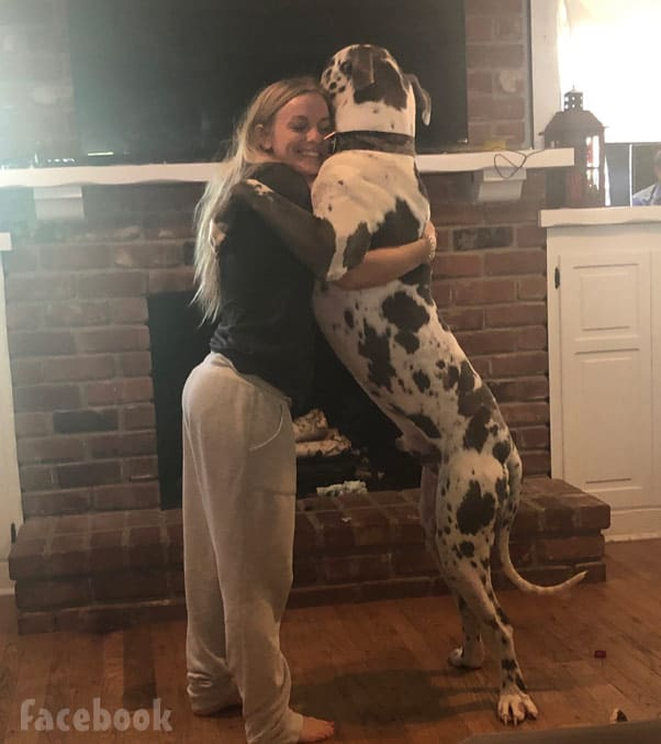 Mackenzie McKee and her Harlequiin Great Dane Hank Williams