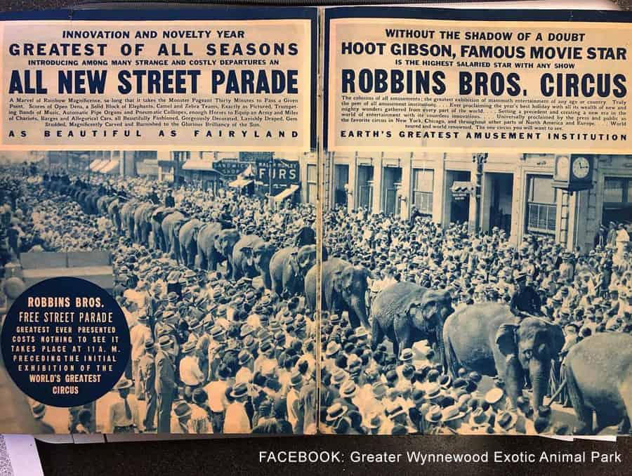 Tiger King Jeff Lowe Robbins Brothers Circus